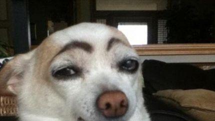 2012年最搞笑动物照出炉